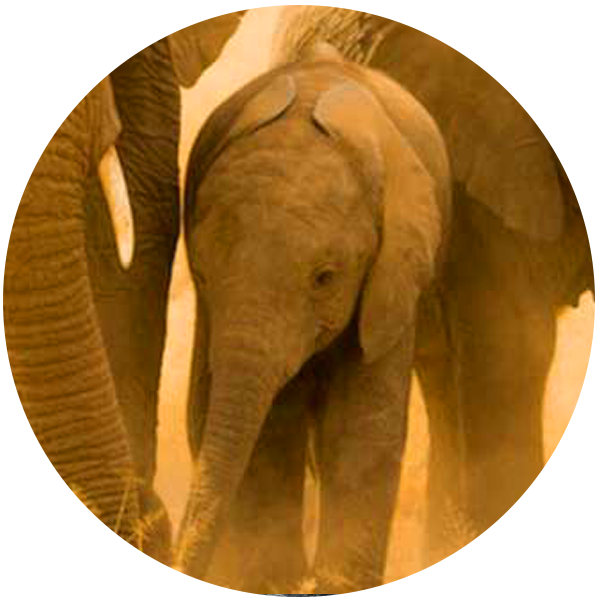 ACC_US_Amboseli_Conservation_Project