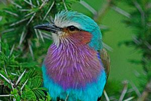 Beautiful_Bird