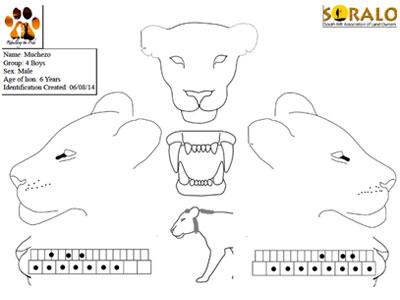 Soralo_Lion_ID_System
