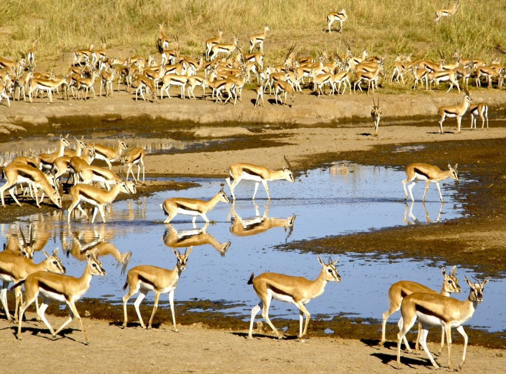 kenyas biodiversity Kenya wildlife service (kws) with the goals of biodiversity protection, providing sustainable livelihoods, managing tourism, education and training and reducing conflicts between stakeholders of the area (muthiga.