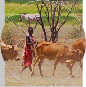 African Conservation Centre - SORALO