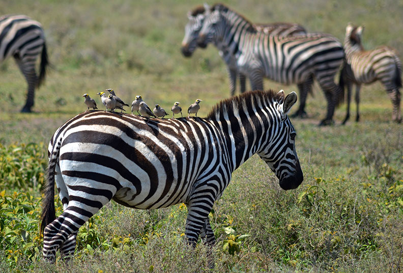 ACC-US/ACC Receives JRS Biodiversity Foundation Grant