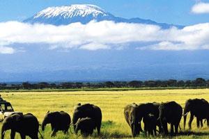 Kenya Conservation Safari - Day 3