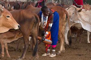 Kenya Conservation Safari - Day 6