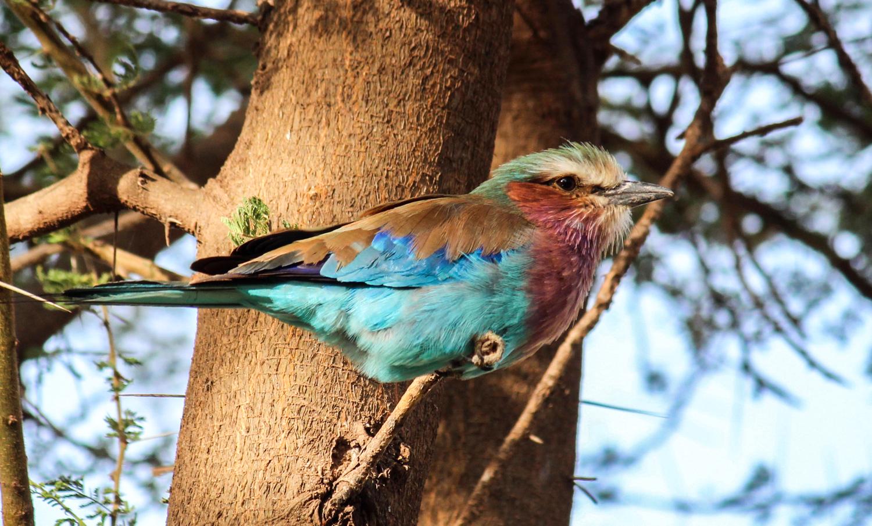 23-Ranbow Bird-JM