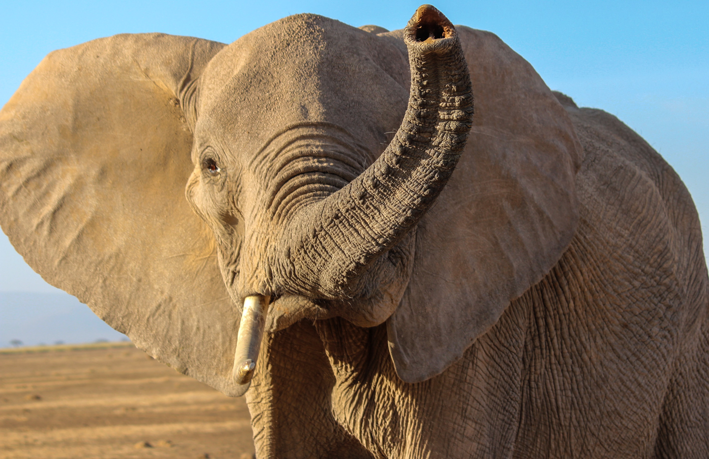 4-Elephant Sniffing-JM