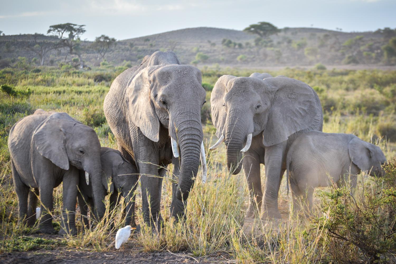 ACC Kenya Conservation Safari 2017
